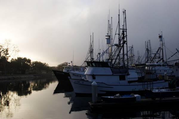 Foggy Morning at the Marina II