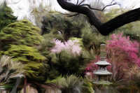 Japanese Gardens, Huntington Library