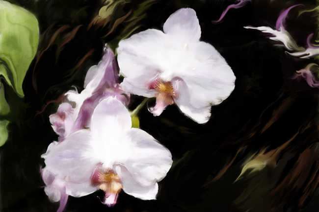 Orchid Flight