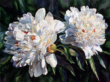Two White Peonies
