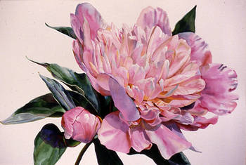 Peony with Bloom