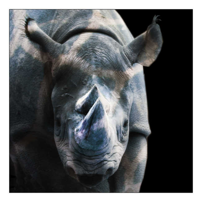 Coexist Rhino Blue