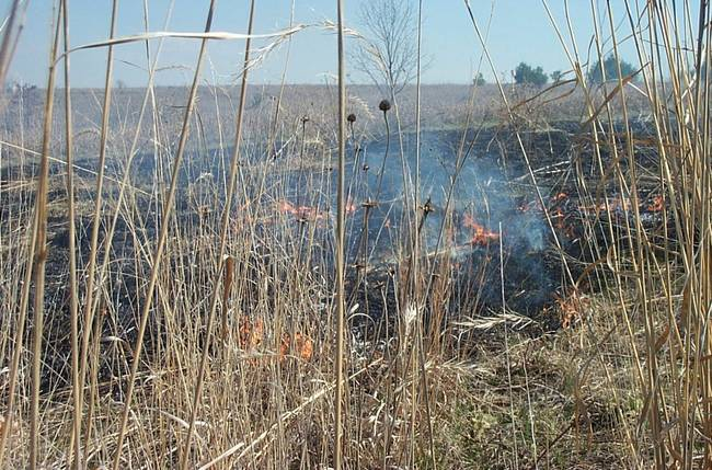 Native Prairie Remnants & Controlled Burns