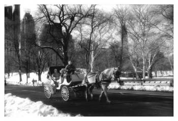 Central Park - Carriage