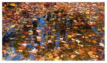 Fall Leaves - reflection (1)