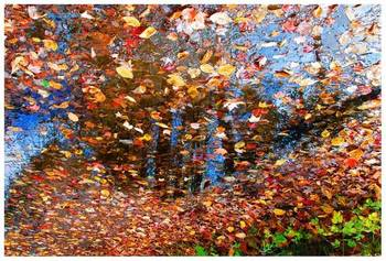 Fall leaves - reflection (2)