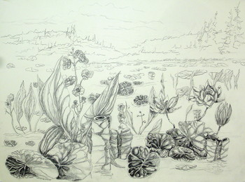 Waterlilies and Arrowroot