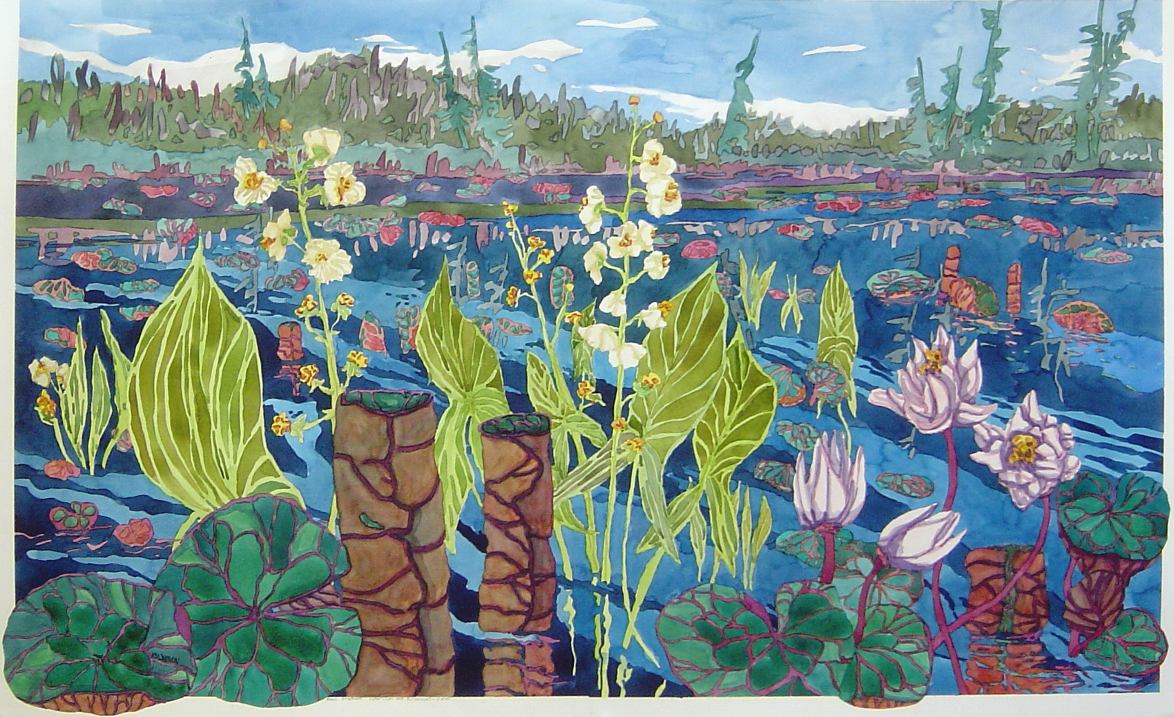 Waterlilies and Arrowroot - Water