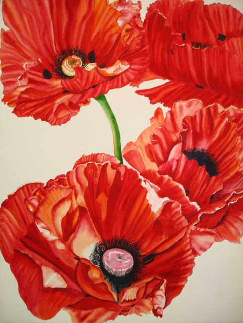 Red Poppies No. 1