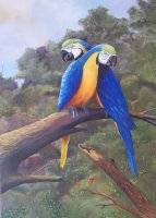 Love macaws 2